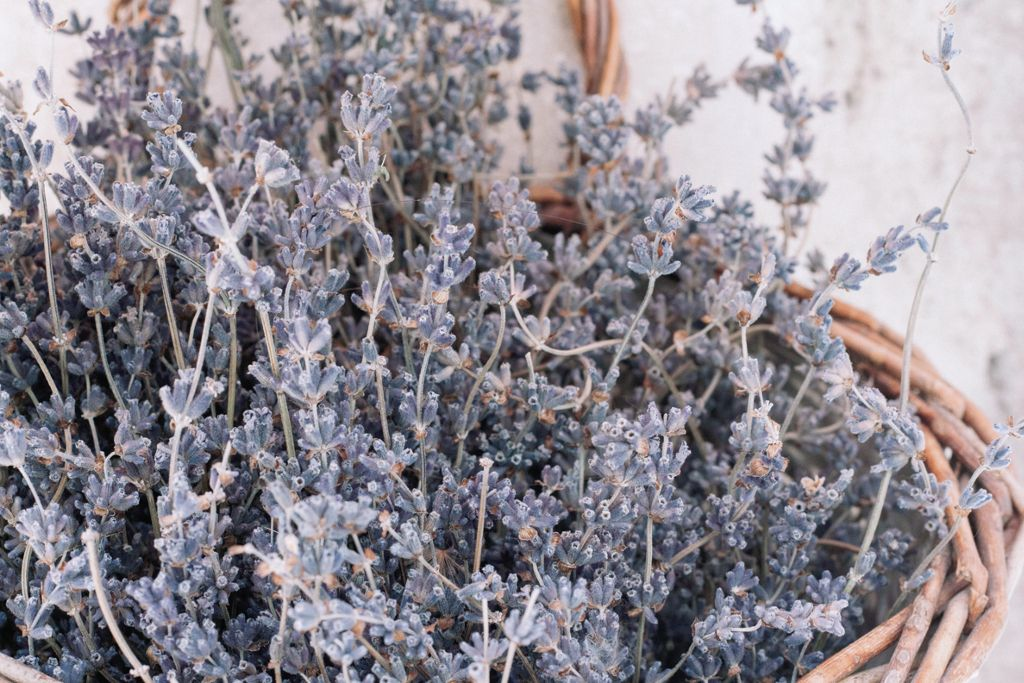 How I fell in love with lavender